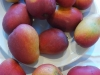 harders-mango-variety